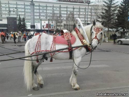 """Сбруя на лошади - Амуниция для лошадей - Фотоальбом - ООО """"ХабаТМ"""""""